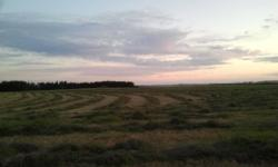 2011 season first cut hay. Mixed grasses and alfalfa. Great feed for anything that eats hay. Baled without rain, stacked and tarped ready for pick up. Typically sell fast so contact asap to guarantee availability of your supply.