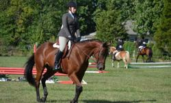 My name is Melanie, I'm 17 and looking for a job at a barn. I have 3 horses of my own which I take care of, I have been riding since I was 4 and have been taking lessons for 9 years. I have a 5 year old Thoroughbred ex-racehorse that I have done all the