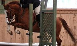 My name Ashley Taylor, I recently moved to the valley with my fiancé and love it! Ive been riding and working with horses for 12 years now and really want to pursue horses as a career. I am looking for a job as a stable hand, as well as working with