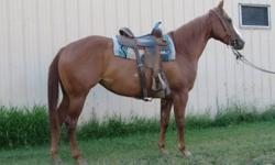 2007 AQHA sorrel mare.  Bred to be a champion!  Foxy is royally cowbred, but that's what makes her so athletic!  She is catty and quick and is showing real potential on the barrels!  She is well started and loping a solid pattern.  After some legging up,