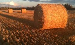 36 Barley straw bales  5'x5'  $20 per bale loaded.