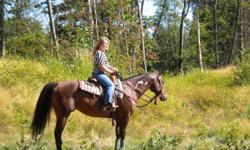 2001 APHA registered mare, 15 hands high. HANDS OFF MY ZIPPER, aka Roxy rides western or english. Was professionally trained and shown. Is awesome on the trails! Goes out alone or with a group. Great for the farrier, loading an all around great mare.