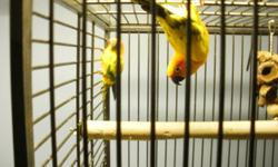 hi there l have two bonded pairs of sun conures for sale or trade for 1200 a pair if intersted please call me or email me thanks. willing to trade both pairs for a pair of macaws.