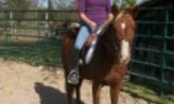 """""""Honey Bee""""   Flashy welsh pony mare for sale. 5 years old, 13.2. Walk and trot, used in lessons, great little pony. Would like to sell before winter. Not papered.   Posted for a friend. Please call 613-802-8430 or"""