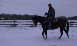 The beauiful and very kind filly has two months of pro. horse training. She has three white socks and a big white face with a beautiful red coat and balck mane and tail. Will try to add better picture. She very quiet and easy to get along with and easy to