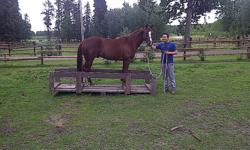 I am offering for sale my four year old gelding Cricket. Cricket has recently completed one month of  Natural Horsemanship with Dave Laboucan and did very well , he is 14.3HH and has the most sweetest personality , loves people and attention, is the first