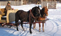 "Black Percheron quarter horse cross 5 year old and Roan Belguim quarter horse cross 4 year old, geldings,16.2 & 16.1 HH, 1350 lbs each, well started in harness. Carriage harness also for sale, 22"" collars, $2,200.00.  E-mail or call after 7:00 PM"