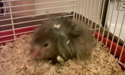 I have a just under a year old teddy bear hampster for sale, paid over 80 including the satrted kit, ball and accessories for him, asking for $30 OBO, hes very friendly doesnt bite, he comes with the cage, wheel, water bottle, food dish, shavings and