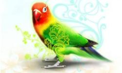 Website: http://www.parrothotel.ca/ Are you going on vacation?? WE CAN HELP!! The Parrot Hotel is a professional pet sitting business that provides in home avian boarding. We understand the bond you have with your feathered friend and we will continue to