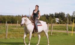 If you're looking for a Registered Mare that will do anything you ask , has great manners, can have any rider of any age on her without any problems ,bomb proof, is perfect on trails and can be rode English or Western Pleasure and also can  be used as  a