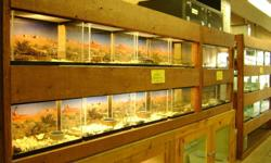 THE WALL OF BALLS ---------------------------------- Normal males ball pythons--$69.99----special $49.99 Normal females ball pythons-$89.99---special $69.99 Pastel male ball pythons---$149.99 Pastel female ball pythons--$249.99----special $199.99 Pewter