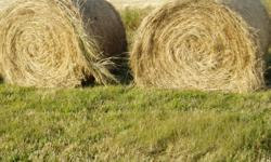 Timothy Round Bales for Sale Approx 1200 lbs Put up with no rain and baled dry. Can load 25 minutes North of Cochrane in Bottrel area. Asking$50