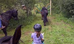 Come on out to our trail horse challenge every Saturday at 11 am near Vanscoy, SK, only 15 min. West of the city. Challenge your horse with 12 different obstacles set up on our forest trails. It's not only a great opportunity to desensitize green horses