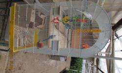 i have 1 femaile white budgie. she is beautiful and loves to chirp. i also have 1 blue and white female budgie what also loves to chirp and be mischeivious. and i have 1 male blue budgie what loves to sing all day..this trio comes with a large white cage