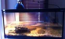 Selling 2 year old turtle healthy and very active Selling with the tank and all the accessories light ,filter and gravel Asking $30 4168295276