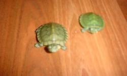Hi.I have 2 turtles very cute and friendly and very little coin size with turtle food.(519)962-5114