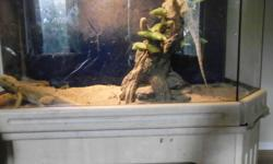 I have two beardies for sale. 1 Male and 1 Female. They come with two seperate terrariums( one is an Exo-Terra and the other one is a stand mount that opens on the top) The come with four different light ballasts, rocks, feeder dishes, a reptile hammock,