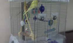 I am selling two budgies plus their cage and many accessories including perches, swing, bird bath, food and more. The two budgies are not hand trained but still very entertaining. Wouldn't get rid of them but heading to school and can't keep them. Looking