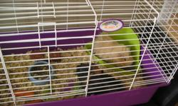 I have two small guinea pigs free to a good home. They are both very friendly. Both come with their own large cage and accessories. They are two males and are brothers. Total cost for both was $500.00 with cages and accessories. Unfortunately a problem