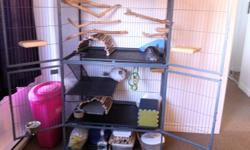 Two male chinchillas: Oliver (regular, 7 years old) & Eli (mosaic/fancy, 3 years old) Fantastic, litter-trained and people/pet friendly! Comes with cage, toys, branches, carrier, everything! Looking for a loving, smoke-free, permanent home :) Only selling
