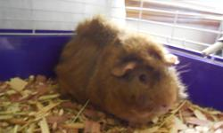 Are you moving or had a change of circumstance and now can't take care of your pet? If so contact me I am willing to take in rabbits, guinea pigs, hamsters and various other small rodents to foster them until a new home can be found. I do this at my own