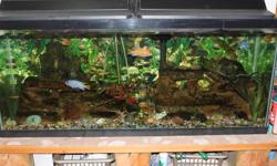 I am wanting to change my freshwater tank to a saltwater tank so I need to sell off my various Cichlids.  All of the fish are in good health and range in size from 1 inches to over 4 inches long.  They have been fed a wide range of food (flake, pellet,