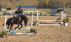 Ryder is a 12 year 15'3 hand registered canadian warmblood gelding.  He is an amazing horse with a fantastik personality. He is a great athlete who loves to to a variety of things.  I have used him for jumping, dressage, trail riding, and as a lesson