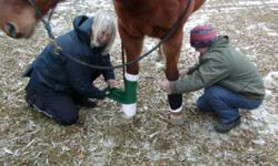 """""""FROM THE HOOF UP"""" AUTUMN HORSE POWER SERIES STARTS NOVEMBER 5TH!  Stay active all winter long and learn about horses the EASY way, with fun, practical, hands-on experience! International coach shares her 32 years of professional and passionate"""