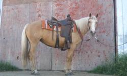 MINDY MINDY IS A 6 YEAR OLD, 14.3HH, GRADE PALOMINO MARE.  SHE IS AN AMAZING HORSE THAT HAS BEEN RODE IN THE MOUNTAINS, THROUGH RIVER'S, ON THE TRAILS, THROUGH THE BUSH, AT THE AUCTION MART PENNING CATTLE, AND IN 4-H BY A NINE YEAR OLD GIRL, AND HER 6