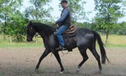 2008 AQHA blue roan gelding by PC Boons Feature and out of a proven barrel racing dam by Super Trader Bar.  Nice gelding with size, bone and is well balanced!   Risk is a good minded gelding, sensible and has good ground manners.  Had 30 days as a 2 year