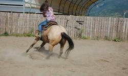 Western Ridding lessons available from beginner to advanced cutting and NH training and liberty. We have an indoor arena and a huge outdoor cutting round pen with flag.  We have horses suitable for beginner children to youth to adults.  We also specialize