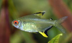 Hey! I have a few tanks open and I am looking to take any unwanted fish. My tank has been up and running for a number of years now. Just looking to try something new. Mostly interested in tetra's, guppies, barbs, catfish or rasbora's, but I am totally