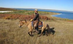 """My name is Stephen Braun and I am the owner/trainer here at """"Winding Road Horse Training"""".  Specialize in colt starting and training horses. I really enjoy seeing the change in a colt from the first touch when they start to trust me and progressing to"""