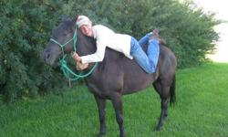 """My name is Stephen Braun and I am the owner/trainer here at """"Winding Road Horse Training"""".  I specialize in starting colts and training horses full time. I also try to have some nice younger prospects, and quiet dependable horses for sale. I really enjoy"""