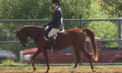 Kyra is an amazing 6 year old, registered 14.2hh mare that is currently being leased to Maple Leaf Meadows as a lesson horse. Kyra is solid at the walk, trot and canter. She knows how to turn on the forehand and haunches and how to carry herself in a