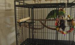 A certified 1 1/2 year old yellow naped amazon parrot, complete with papers from PJ's pets store is for sale including its big cage and its accessories.He is tamed, a good talker for his age, loves to whistle and sing the opera and can follow simple