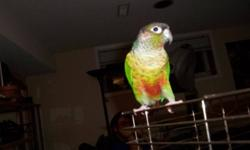 Hey, I am selling my Yellow sided conure because I do not have time to care for him anymore. He is a great bird who can do some tricks and has beautiful coloring. He is 2 years old and is pretty smart. His cage is a good size and does come with a stand.