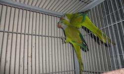 I have a pair of Quaker parrots for sale, they are proven breeders. They are 2 years old and are close banded. I have the DNA papers for them as well. They are very beautiful birds and their feather is in perfect condition. They are very healthy birds,